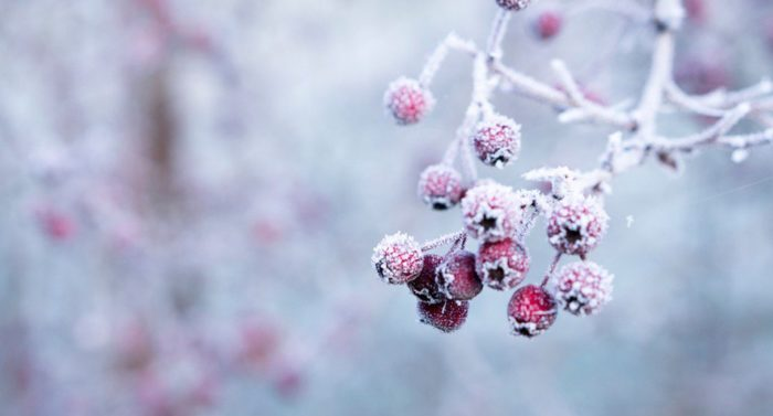 Святочные рассказы: Дмитрий Григорович — Зима, из повести «Четыре времени года»
