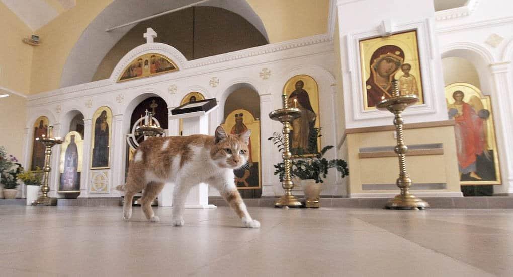 Как кота в алтаре ловили, – рассказ священника