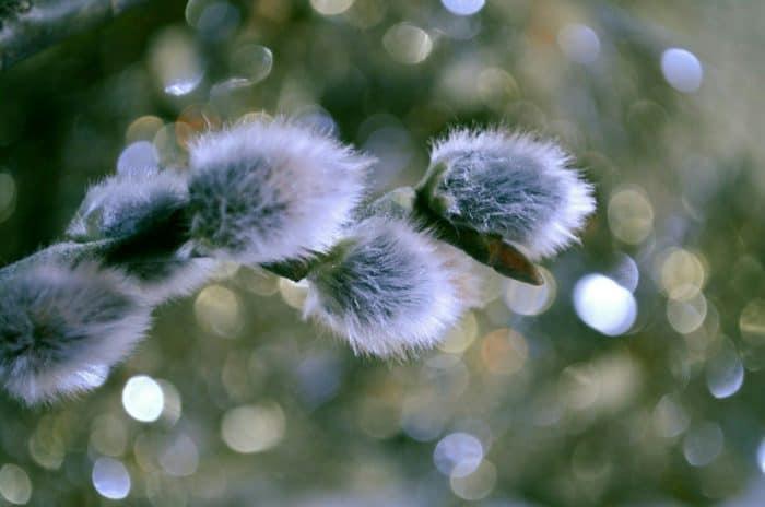«Чувство Пасхи» – итоги пасхального фотофестиваля