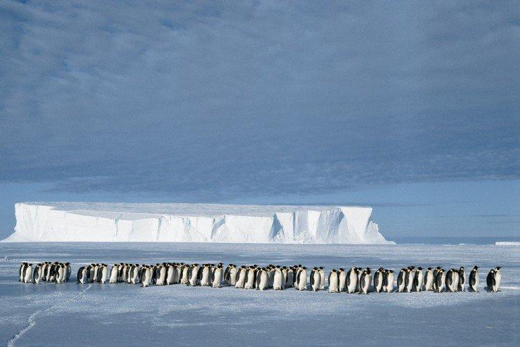 Человек-пингвин, покоритель полюса ветров и бесстрашная медсестра: 3 истории необычных полярников