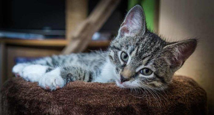 Будут ли говорить коты в Царстве Небесном?