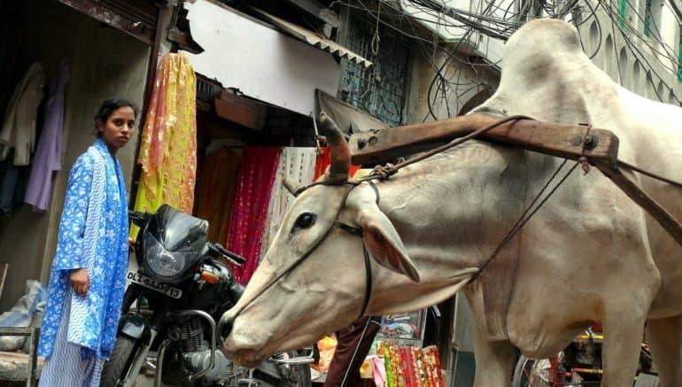 На улице Нью Дели