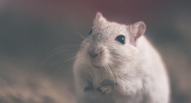 Можно ли не убивать мышей, чтобы от них избавиться?
