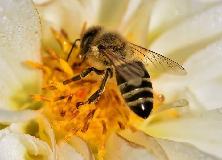 Смогли бы вы быть пчелой? Пройдите наш тест и узнайте!