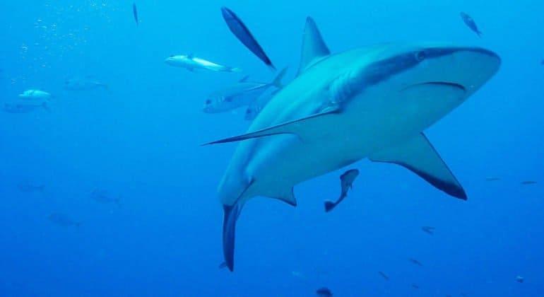 Католический священник в Австралии помог спасти человека, раненного акулой