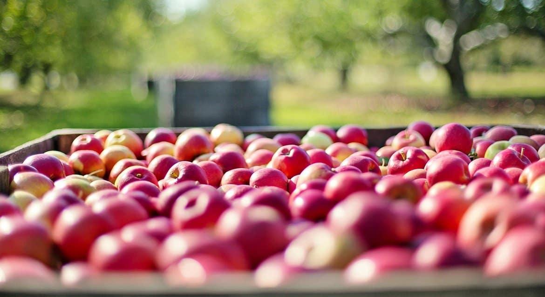 Яблочная ярмарка откроется 19 августа на площади перед храмом в Кубинке