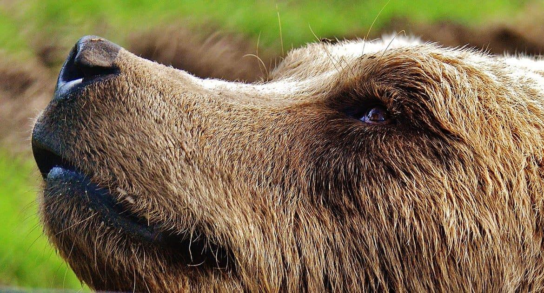 Дружба Серафима Саровского с медведем — выдумка? — рассказывает автор самой подробной книги о святом