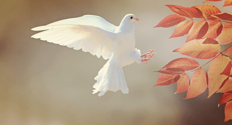Как правильно молиться, если нет Святого Духа?