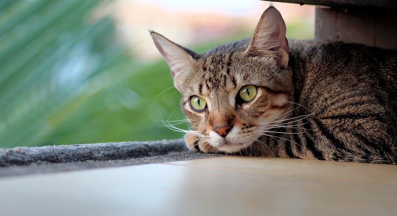 В Церкви успокоили зоозащитников, переживающих за кошек больничного храма