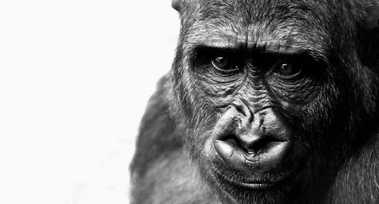 Можно ли верить и в Бога, и в теорию эволюции?