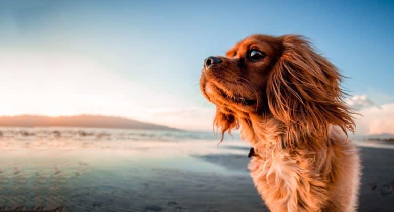 Почему собакам нельзя заходить в церковь?