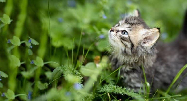 «У меня котик умер, я его отпеть хочу» — удивительная история из жизни священника
