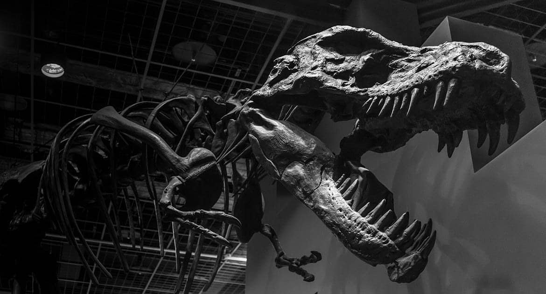 Как понять, что миллионы лет назад жили динозавры, и они вымерли, а человечество живет всего 7000 лет?