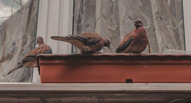 Можно ли на Благовещение кормить птиц из окна?
