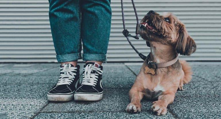 Можно ли ослушаться мужа и купить собаку?