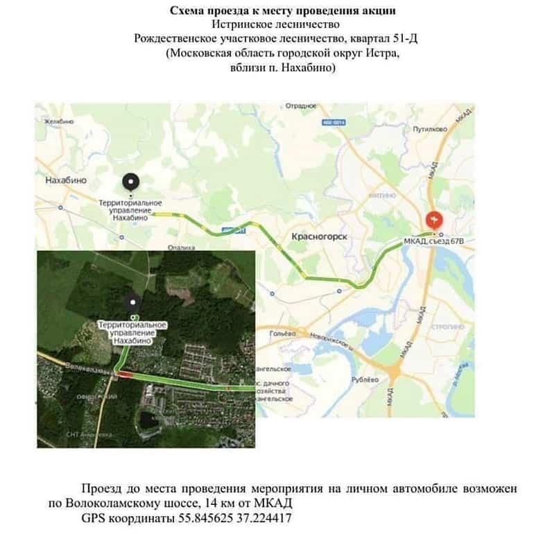 23 мая в Подмосковье посадят «Удивительный лес»: приглашаются все желающие!