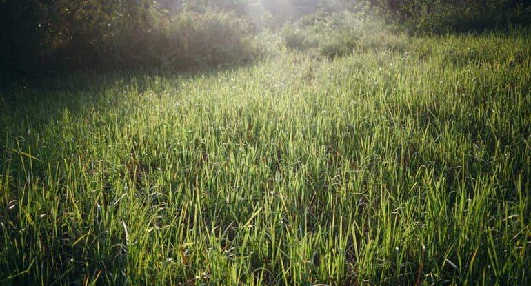 Можно ли косить траву до Троицы?