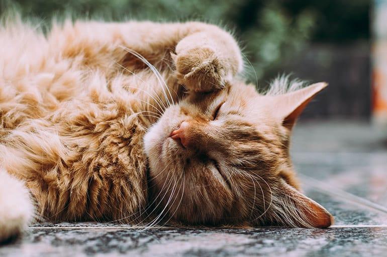 Как священник думал о вечности и встретил мусульманского кота с абсолютно христианскими понятиями