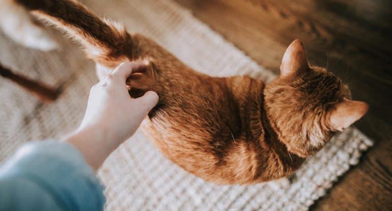История кота с ужасным характером: его несколько раз топили, но так и не утопили