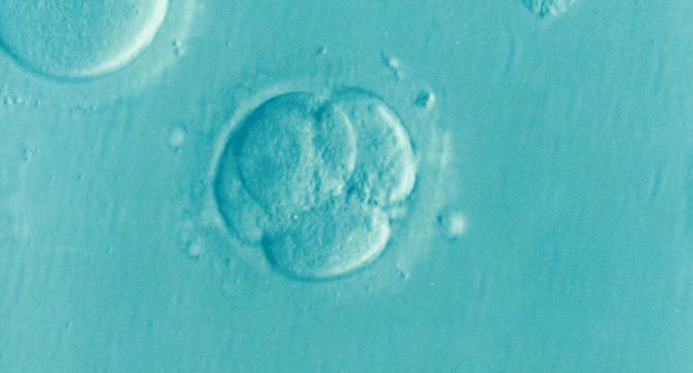 После ЭКО остались эмбрионы. Муж не хочет еще детей. Что делать?