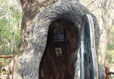 Директор Кутаисского ботанического сада обустроил часовню в вековом дереве
