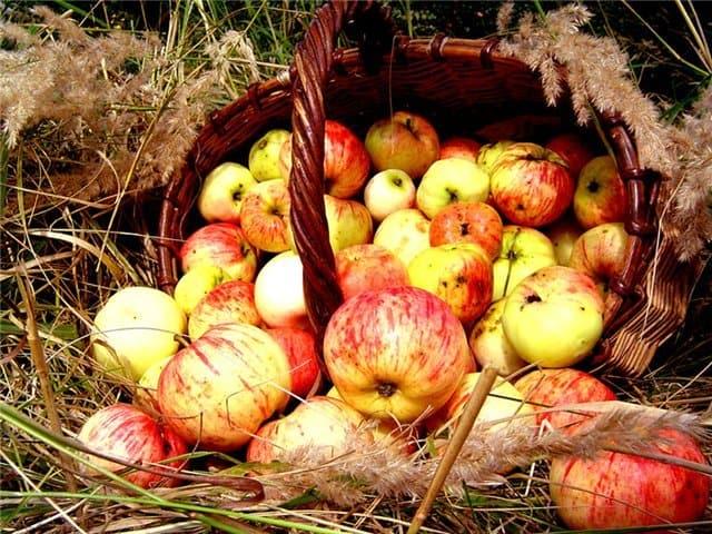 Грех ли есть яблоки до освящения в день Преображения?